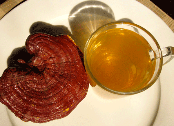 reishi tea from above