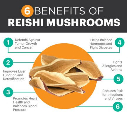 testosterone and medicinal mushrooms