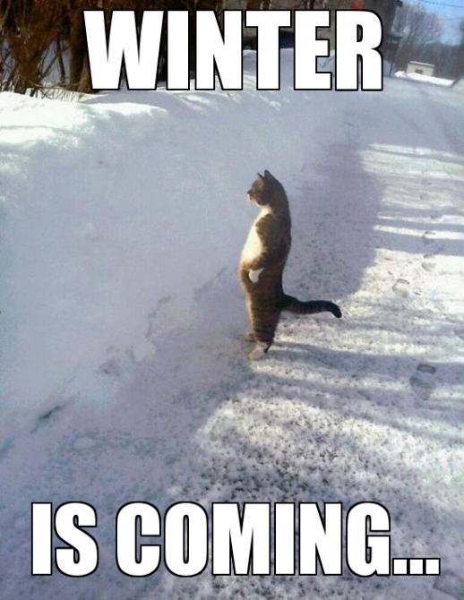 winter is coming cat